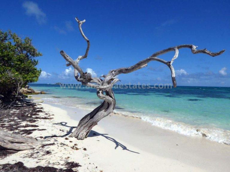 Jabberwock-Beach-driftwood-tree-768x576
