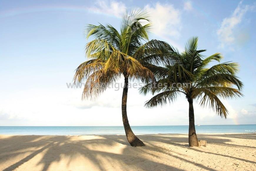 Jolly-Beach-Resort-870x580